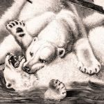 Схватка белых медведей