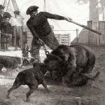 Медвежья битва