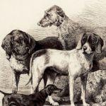 Призеры выставки собак в Клеве
