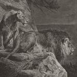 Пара львов в засаде