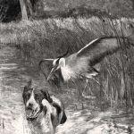 Цапля и собака
