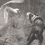 Конфликт между собакой и лебедем