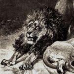 Лев проснулся