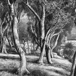Оливковая роща на озере Гарда