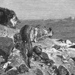 Пара львов наблюдает за лагерем каравана