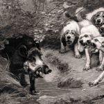 Захват кабана собаками