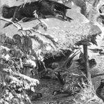 Лисья охота на фазанов