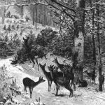 На рождество в лесу