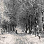 Прогулка по зимней лесной дороге