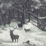 Зимняя ночь в парке дикой природы